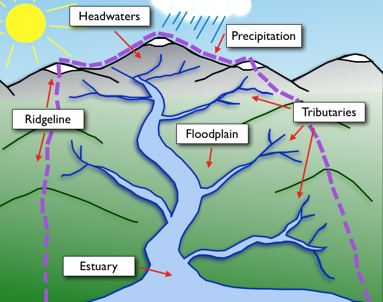 A basic sketch of a watershed's elements.