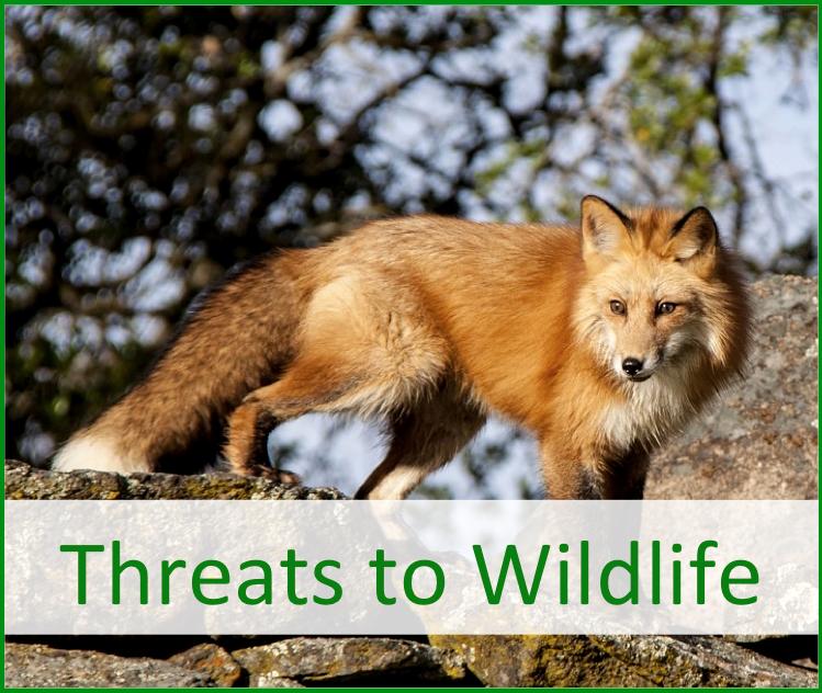 Threats to wildlife environmental sierra nevada yosemite