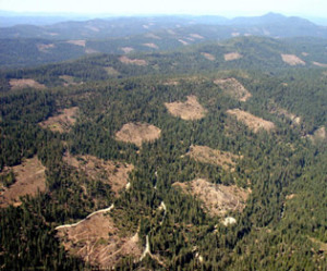 Aerial Clearcuts forests degraded