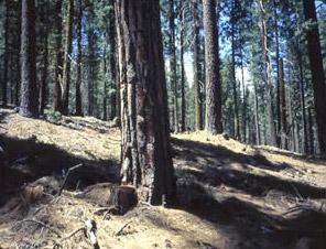 Thinning Logging