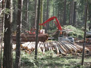Thinning the forest