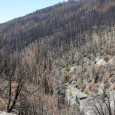 What does the new Rim Fire Reforestation decision mean?