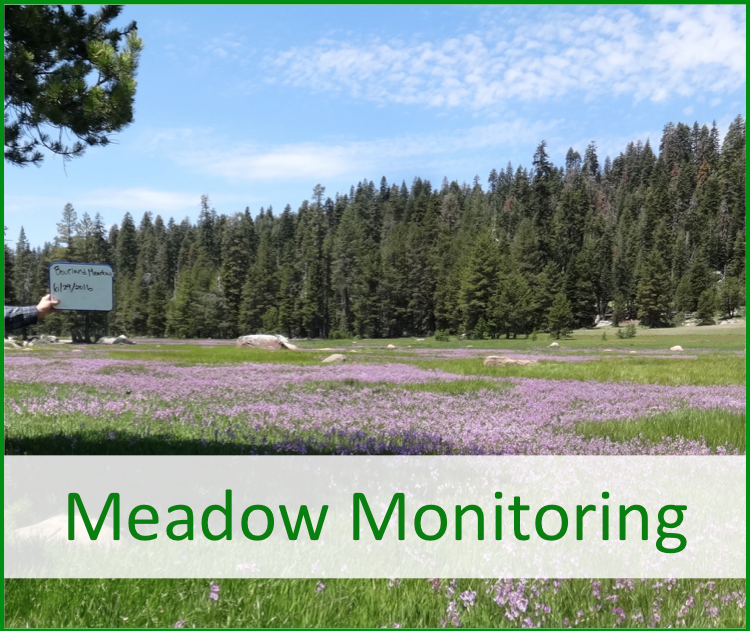 Meadow Monitoring