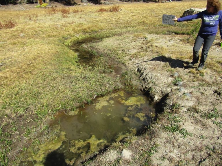 Lower Three Meadows overgrazed and stream damaged - in a meadow that is not supposed to be grazed.