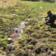 Forest Service fails to protect public forest streams from contamination by commercial livestock operations