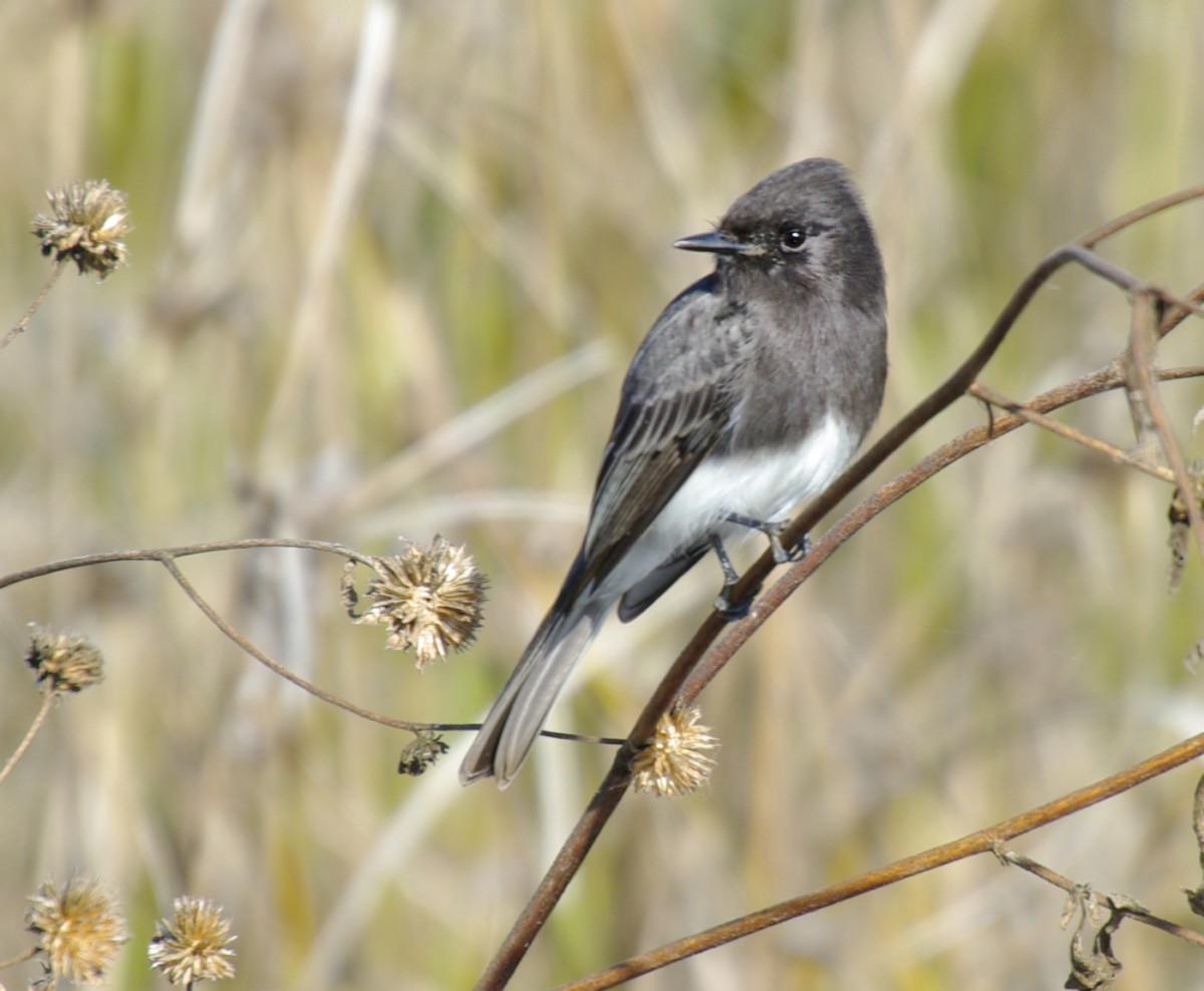Pequeños pájaros cantantes completan vuelos sin escalas extraordinarios a través del Océano Atlántico - Green - Noticias - Catholic Online