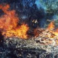 Two prescribed fires scheduled this month on the Stanislaus Forest
