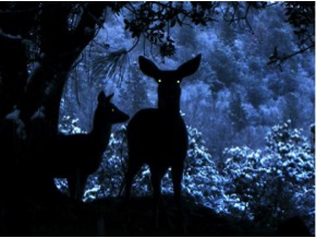 deer in silhouette