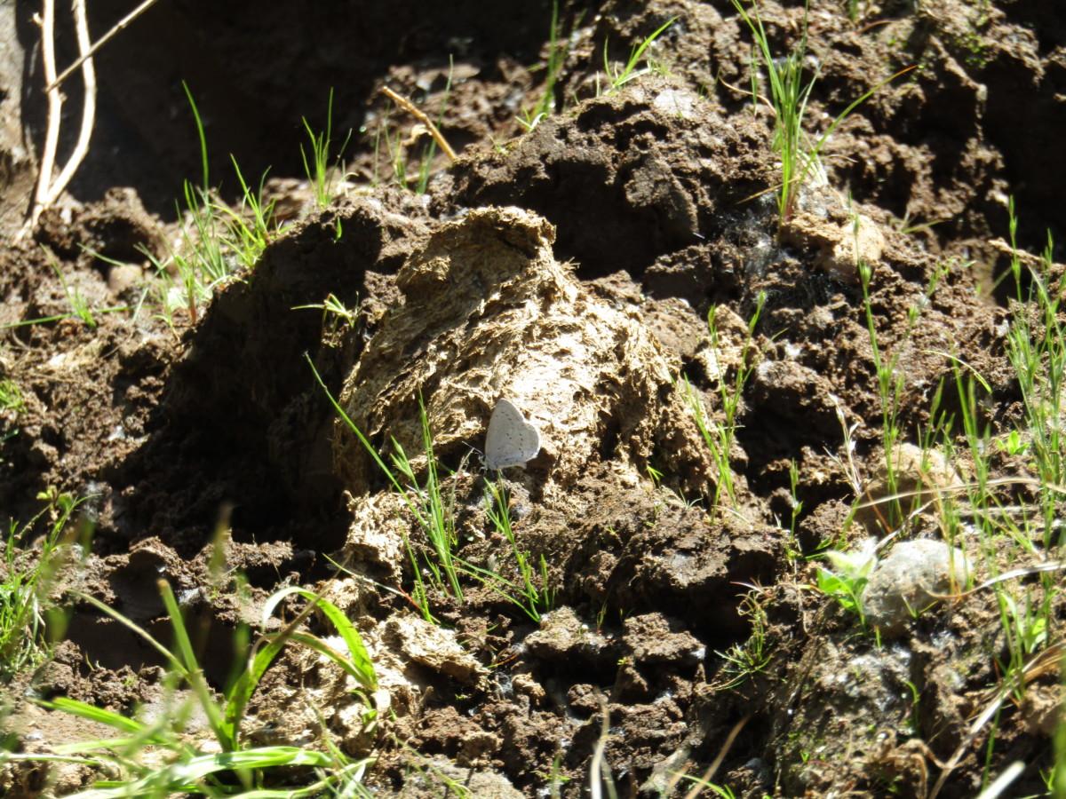 mud-puddling