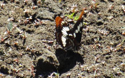 butterfly slider