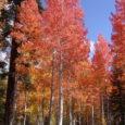 Fall Foliage Lights Up the Sierra Nevada