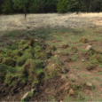 CSERC monitoring uncovers new violations at overgrazed meadows and wetland areas