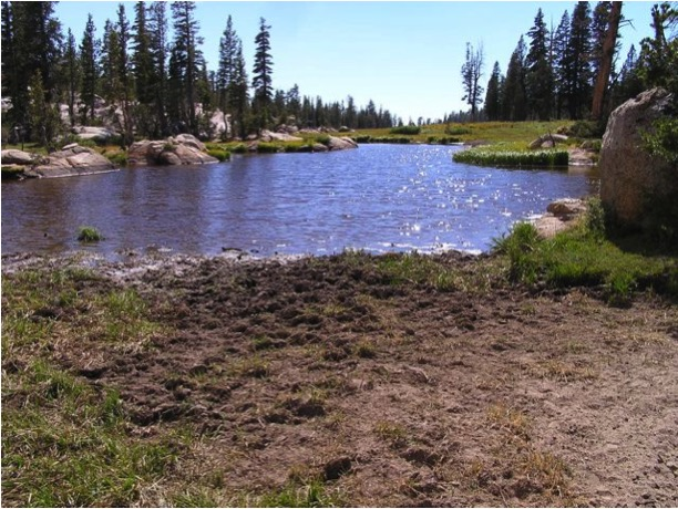 National Forest Water Resources