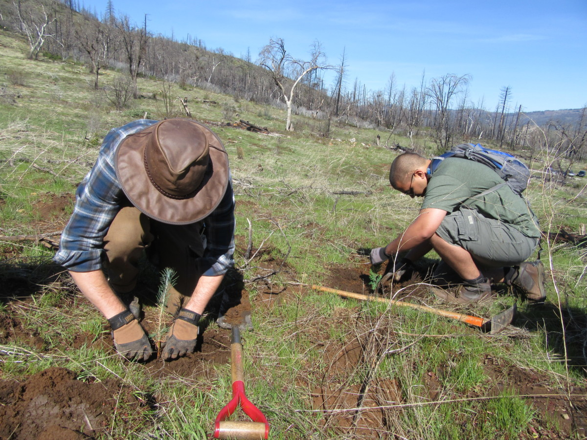 volunteer tree planting rim fire 2017
