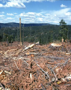 Clearcut Trees