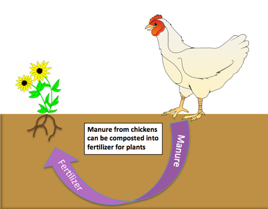 Watershed Game Chickens Correct Cserc