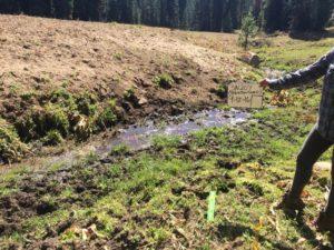 riparian damage bare soil livestock Grazing