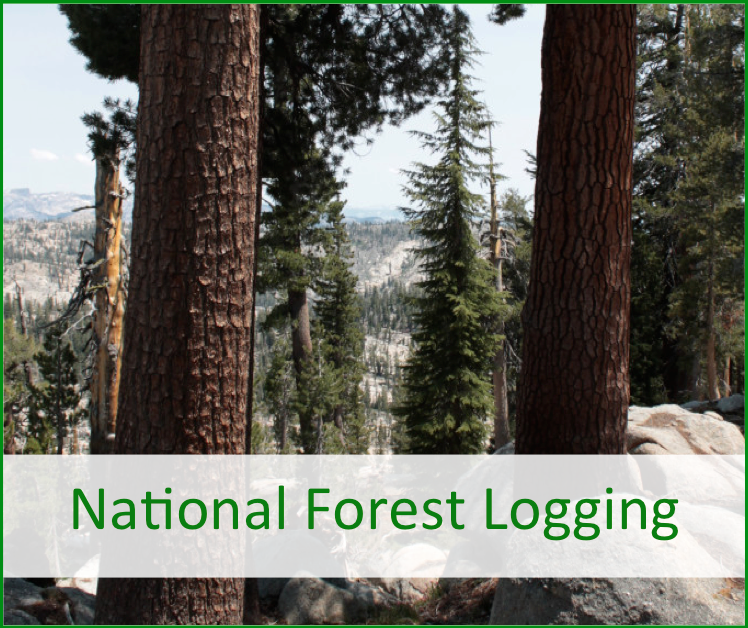 national forest logging practices
