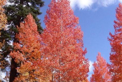 Fall Foliage Lights Up The Sierra Nevada Cserc