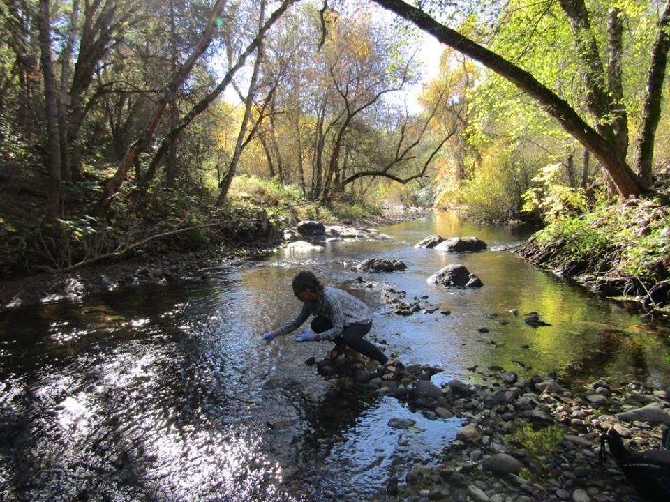 cserc foothill stream sampling