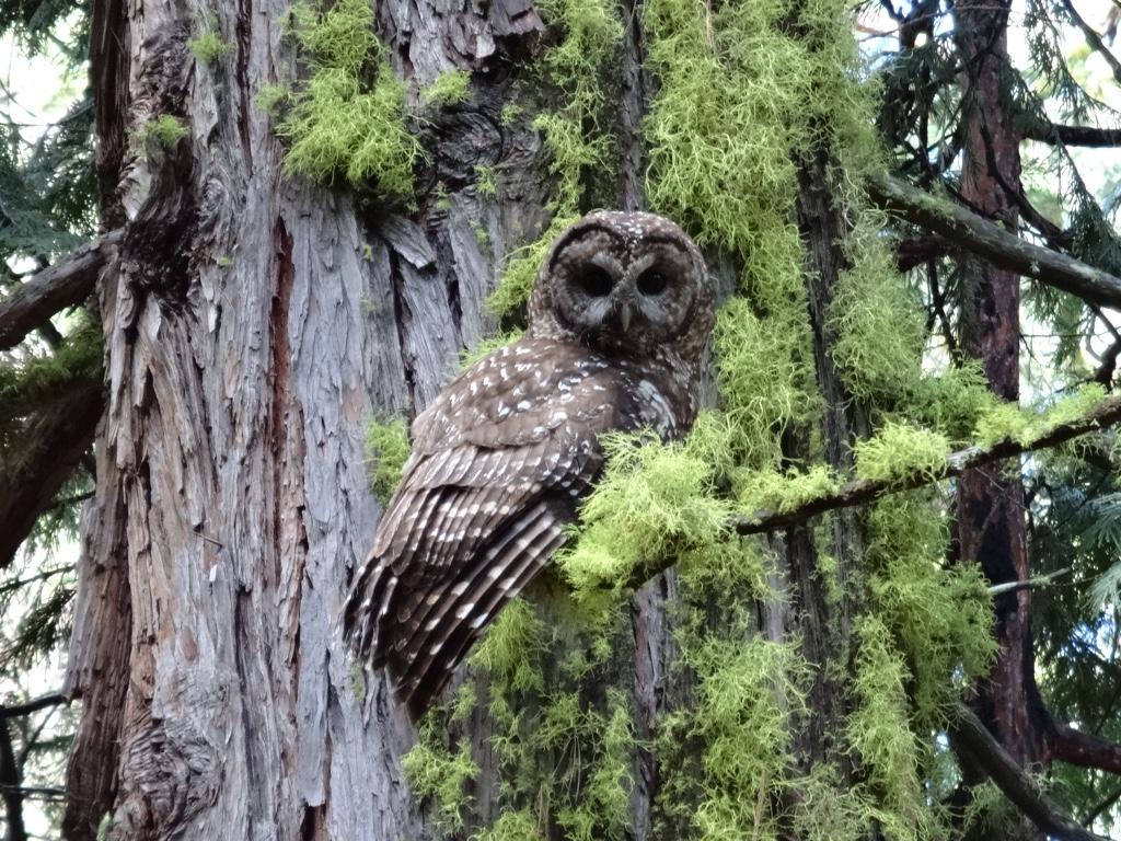 Resultado de imagen para Los árboles proporcionan sus copas y un hábitat para la vida silvestre