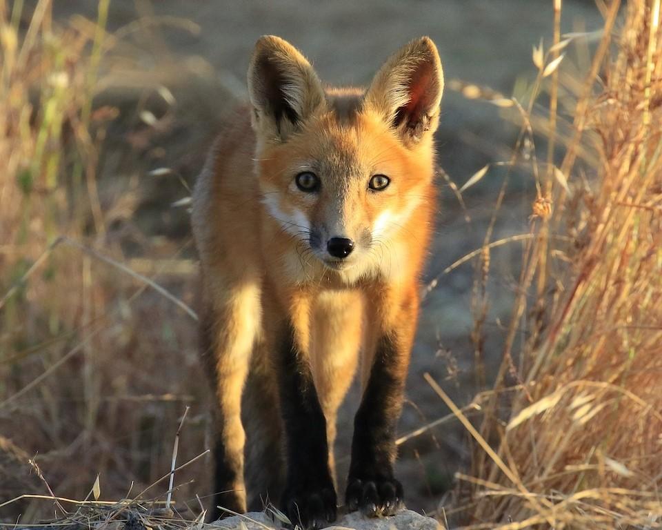2019 Wildlife & Landscape Photo Contest Winners Announced! - CSERC