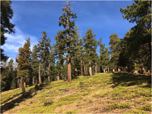 Be an environmental activist for the Central Sierra Nevada